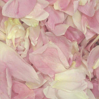 Beautiful Blush Preserved Freeze Dried Peony Petals