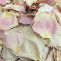 """BB"" Bewitched Preserved Freeze Dried Rose Petals"