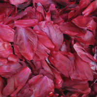 Red Peony Preserved Freeze Dried Petals