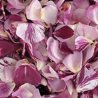 PASSIONATE KISSES Preserved Freeze Dried Rose Petals