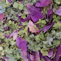 Deep Preserved Freeze Dried Blend Peony & Hydrangea Petals