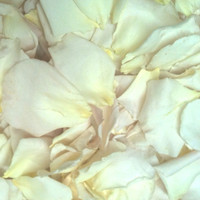 French Lace Preserved Freeze Dried Rose Petals