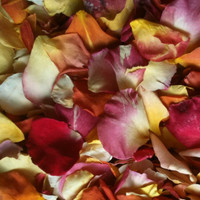"""BB"" Sunset Preserved Freeze Dried Blend Rose Petals"
