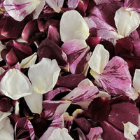 Seduction Preserved Freeze Dried Rose Petal Blend-Fragrant