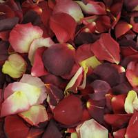 Celebrity Preserved Freeze Dried Rose Petal Blend