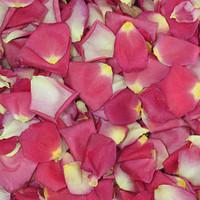 Tango Preserved Freeze Dried Rose Petals