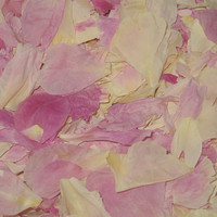 Peony Pathway Preserved Freeze Dried Petal Blend