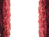 PHOTO ALBUM: Rose Petal Path/Aisle Detail
