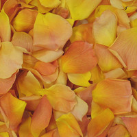 Mango Preserved Freeze Dried Rose Petals LIMITED Edition