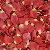 Carnival Preserved Freeze Dried Rose Petals Limited Edition!