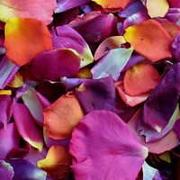 Romantic Rendezvous Preserved Freeze Dried Rose Petals