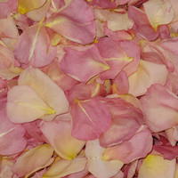 Sumptuous Romance Preserved Freeze Dried Rose Petals