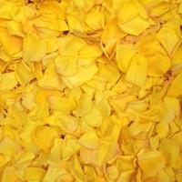 Shockwave Preserved Freeze Dried Rose Petals