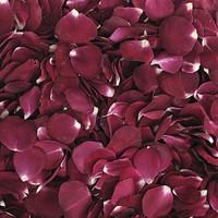 Stargazer Romance Preserved Freeze Dried Rose Petals