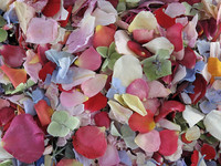 Assorted Flower Petals. Eco-friendly petals from Flyboy Naturals