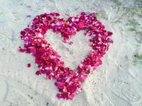 Amy & Jeff Honeymoon Rose Petals.
