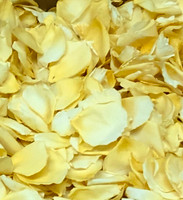 Doris Day Yellow Rose Petals