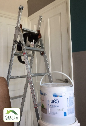 Delilah cat really wants to help with the decorating!