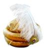 Arabian turban