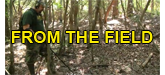 fromthefield-logo.png
