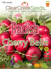 Radish - Cherry Belle (100+ seeds)