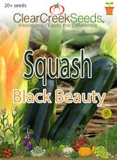 Squash Summer - Black Beauty (20+ seeds)