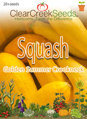 Squash Summer - Golden Summer Crookneck (20+ seeds)