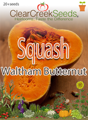 Squash Winter - Waltham Butternut (20+ seeds)