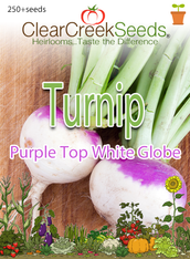 Turnip - Purple Top White Globe (250+ seeds)