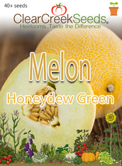 Melon - Honeydew Green (40+ seeds)