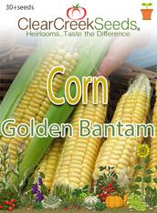 Corn – (Sweet) Golden Bantam (30+ seeds)