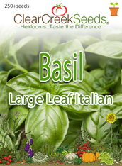 Basil - Large Leaf Italian (250+ seeds)