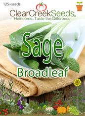 Sage - Broadleaf (125+ seeds)