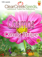 "Cosmos ""Candy Stripe"" (100+ seeds)"