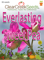 Everlasting Sweet Pea (30+ seeds)