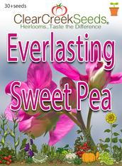 Everlasting Sweet Pea (30+ seeds)
