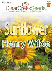 "Sunflower ""Henry Wilde"" (30+ seeds)"