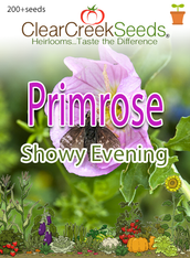 "Primrose ""Showy Evening"" (200+ seeds)"