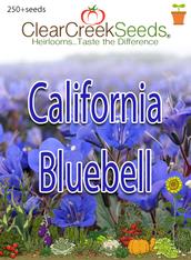 California Bluebell (250+ seeds)