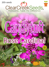 "Candytuft ""Rose Cardinal"" (200+ seeds)"