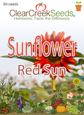 """Sunflower """"Red Sun"""" (30+ seeds)"""