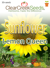 "Sunflower ""Lemon Queen"" (30+ seeds)"