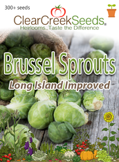 Brussels Sprouts - Long Island Improved (300+ seeds) JUMBO PACK