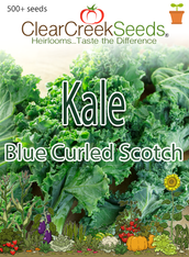 Kale - Blue Curled Scotch (500+ seeds) JUMBO PACK