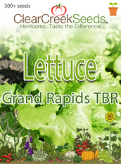 Lettuce Leaf - Grand Rapids TBR (500+ seeds) JUMBO PACK