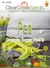 Pea Snow - Oregon Sugar Pod II (50+ seeds) JUMBO PACK