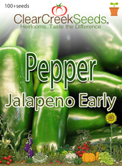 Pepper Hot - Jalapeno Early (100+ seeds) JUMBO PACK