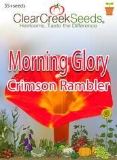 "Morning Glory - ""Crimson Rambler"" (35+seeds)"
