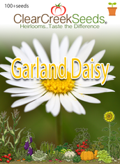 Garland Daisy (100+ seeds)