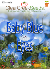 Baby Blue Eyes (200+ seeds)